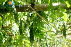 Organic farm near Chalamthang