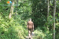 Jungle walk around Chalamthang Home Stay