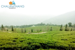 Temi Tea Garden near Chalamthang