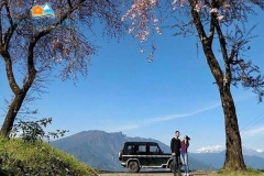 Jeep Tour at Temi Tea Garden