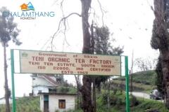 Tea Factory, Temi