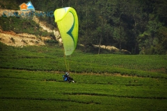 Paragliding at Temi Tea Garden